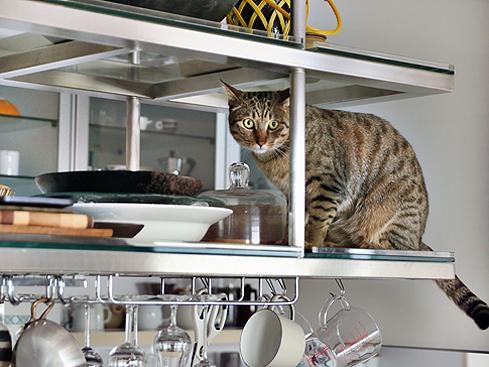 Dish 猫 意味