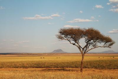 東非Safari•旅中隨帖