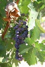 葡萄酒的旅程