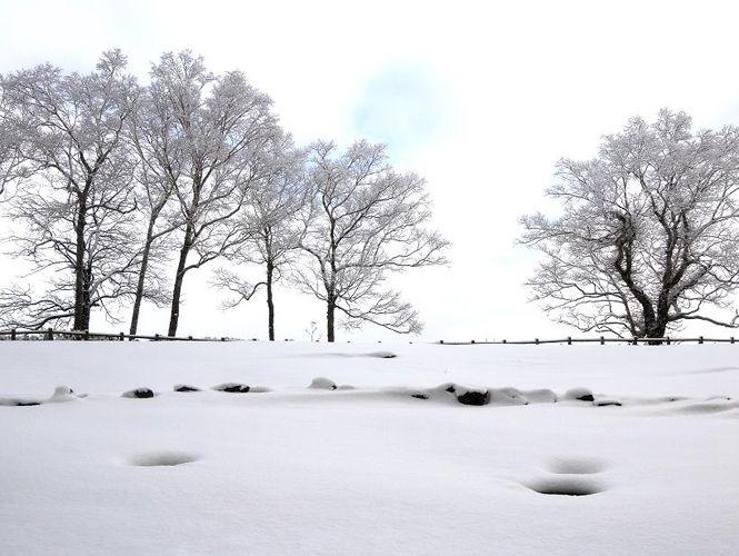冬之洞爺湖 ‧ 旅中隨帖