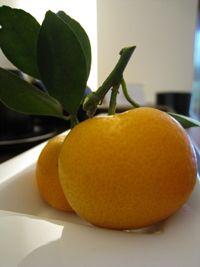 橙之滋味,及我的夏日調酒方