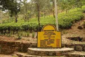 相遇,錫蘭紅茶誕生地