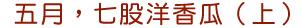 五月,七股洋香瓜(上)