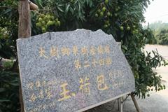 六月,玉荷包荔枝(上)