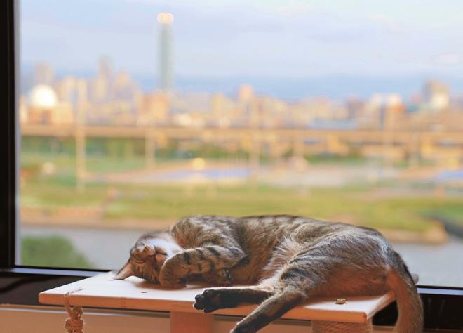 【家貓日記】從春到夏,一些貓時光與貓風景